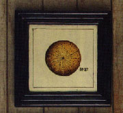 Sea Urchin Shell on Wood with Black Frame HA-1360-27